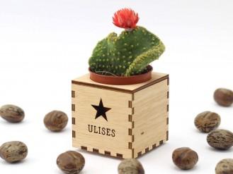 Kajhuchä Q-Box - Estrella y tapa con hueco
