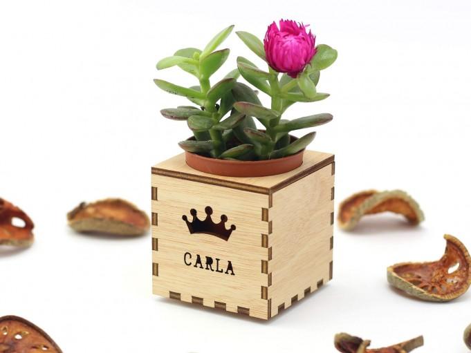 Kajhuchä Q-Box - Corona y tapa con hueco